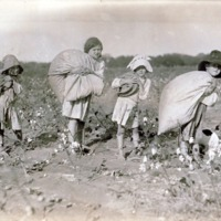 Child Cotton Pickers Haul Heavy Loads